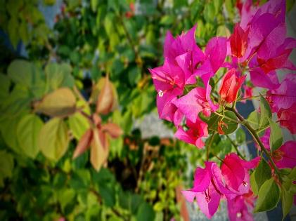 plant ornament garden sunny